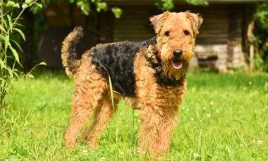 Conheça a história de Dormie, cão que foi julgado pelo assassinato de um gato
