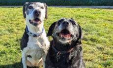 Dono sofre AVC, e cães inseparáveis podem parar em casas diferentes
