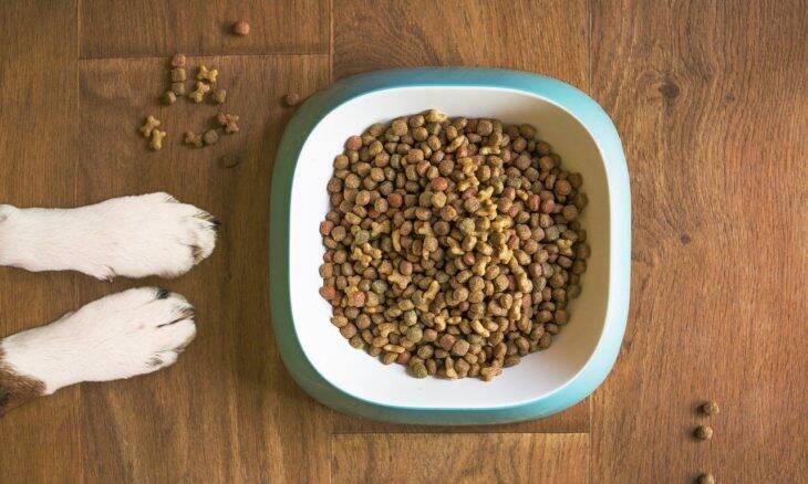 Estudo mostra o quanto a alimentação do dono altera a ração dos cães