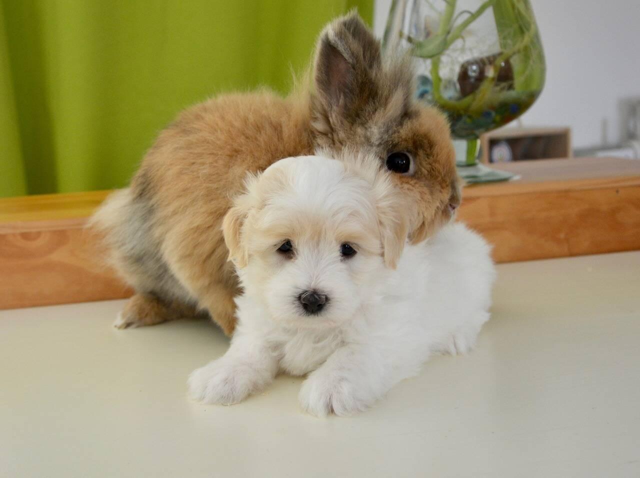 Confira 9 pets pequenos que podem conviver bem com o seu cão