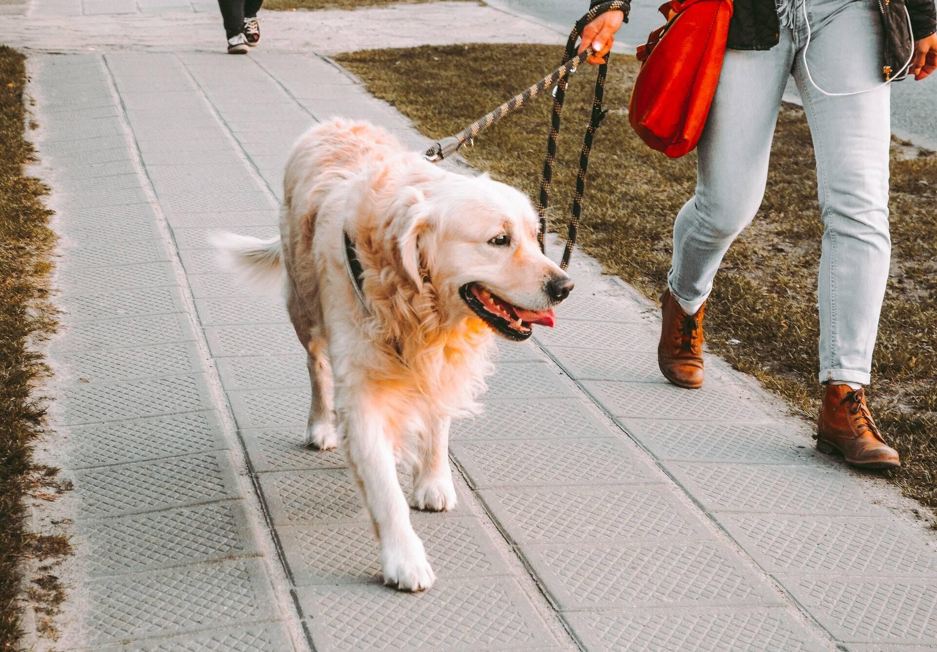 8 razões pelas quais seu cão segue você por todo canto