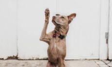 Gatos e cães podem ser canhotos? A ciência responde