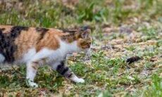 Para controlar os ratos na cidade, Chicago convoca batalhão de mil gatos
