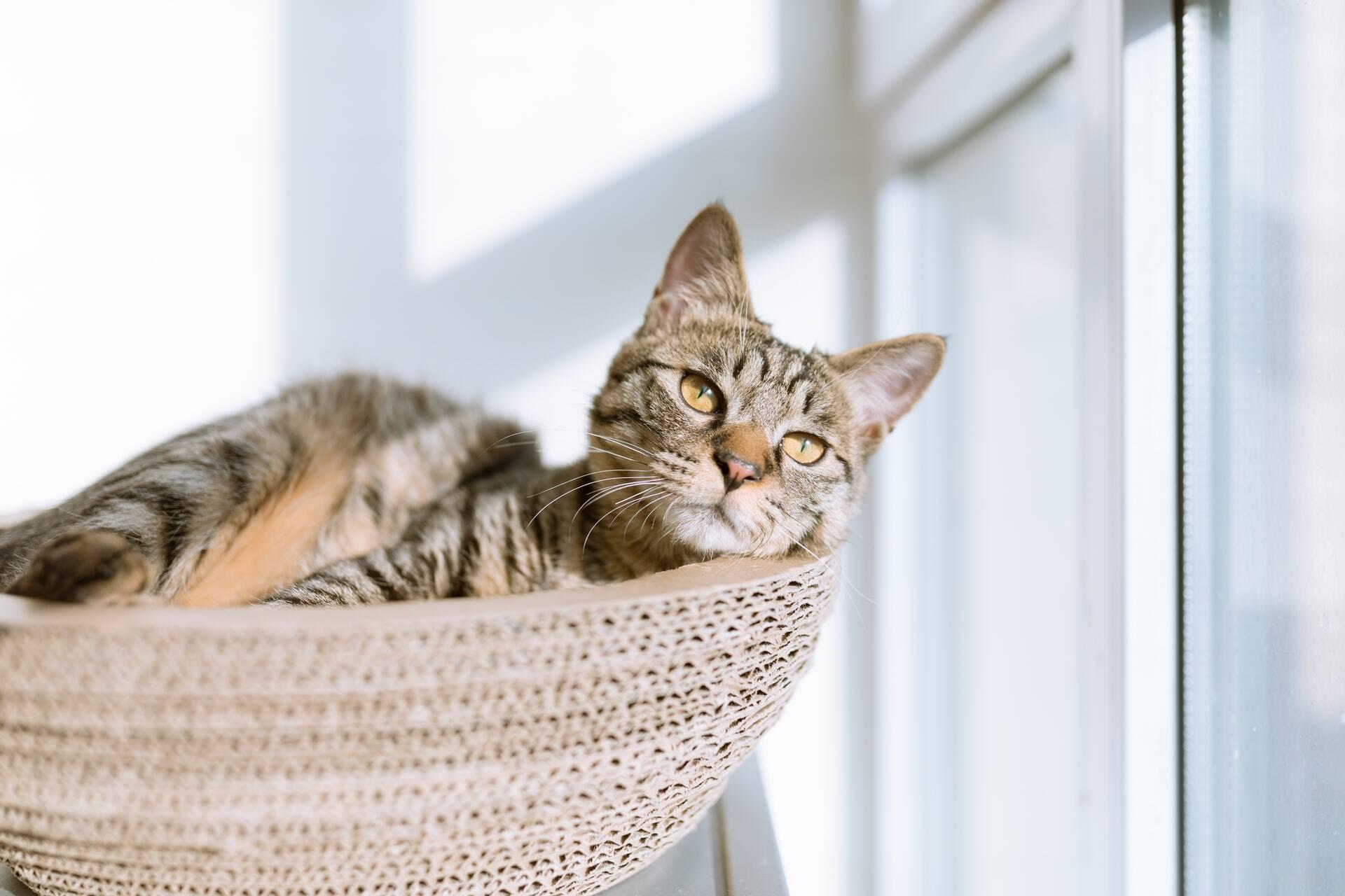 Entenda 6 comportamentos peculiares dos gatos