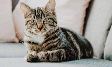 É possível melhorar o comportamento do meu gato? Especialistas respondem