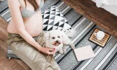 Cães podem pressentir gravidez e prever trabalho de parto em humanos?