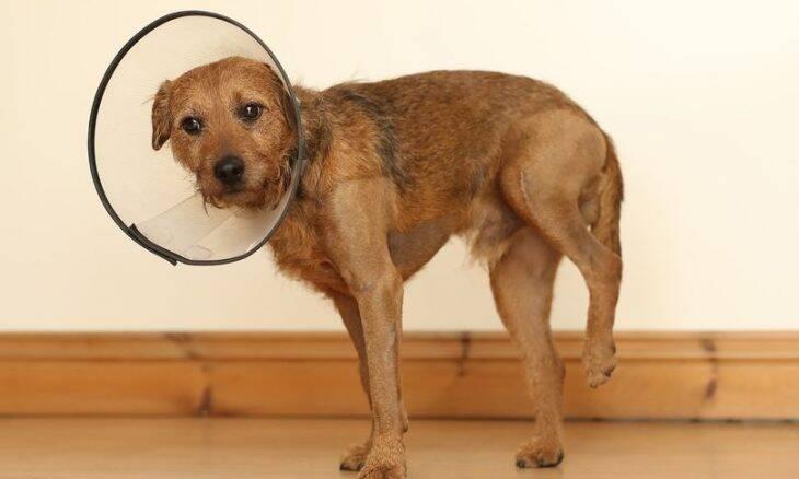 Milagre: cão sobrevive a queda de 121 metros e é salvo por pescador