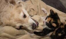 Tem cachorro em casa e vai adotar um gato? Saiba como fazer as apresentações