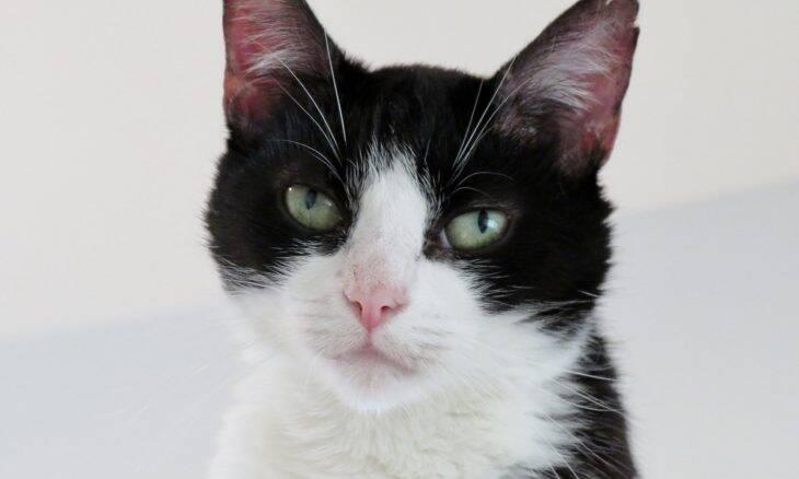 Gato é batizado com nome associado a um pênis na pelagem do bichano; donos são criticados