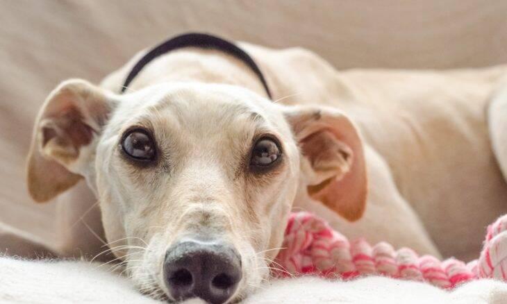 Série de vídeos gratuitos traz tudo o que você precisa para cuidar da visão do seu pet