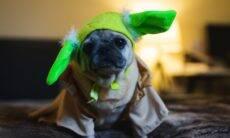 Dia de Star Wars: confira os dez personagens que mais dão nome a pets