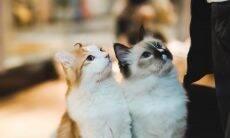 Tudo o que você precisa saber para socializar seu gato