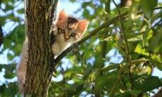 Seu gato está preso no alto de uma árvore? Saiba o que fazer