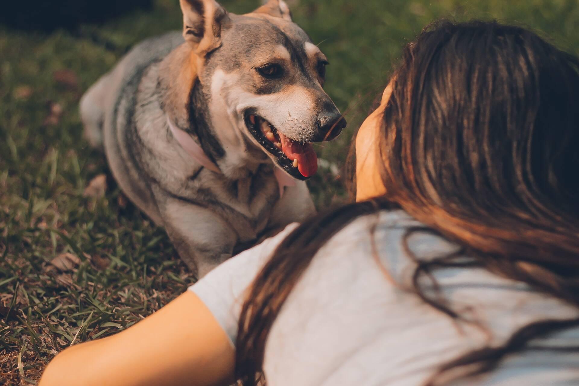 Ciência decifra como os cães leem nossas mentes e sabem quando estamos mentindo