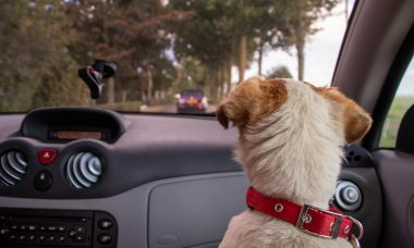 7 dicas para uma viagem de carro perfeita com o seu cão