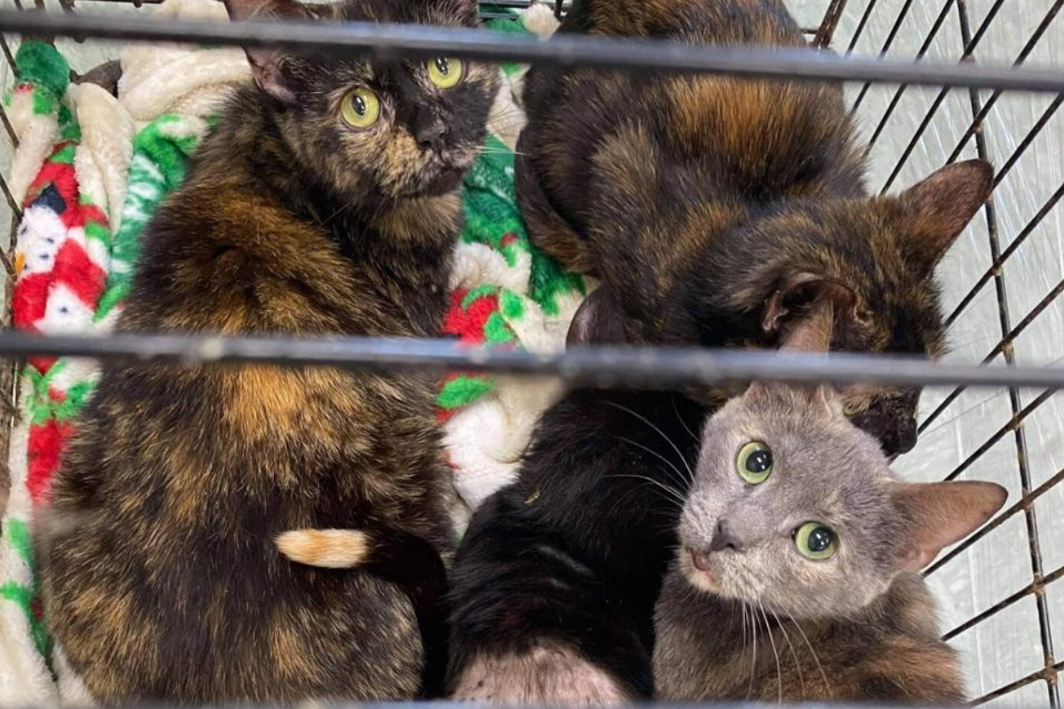 Dono deixa seus 19 gatos em abrigo com um bilhete: 'Estou perdendo a minha casa'