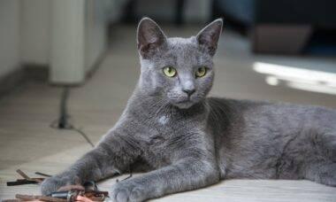 Por que os gatos ronronam? Há mais de uma razão, segundo a ciência
