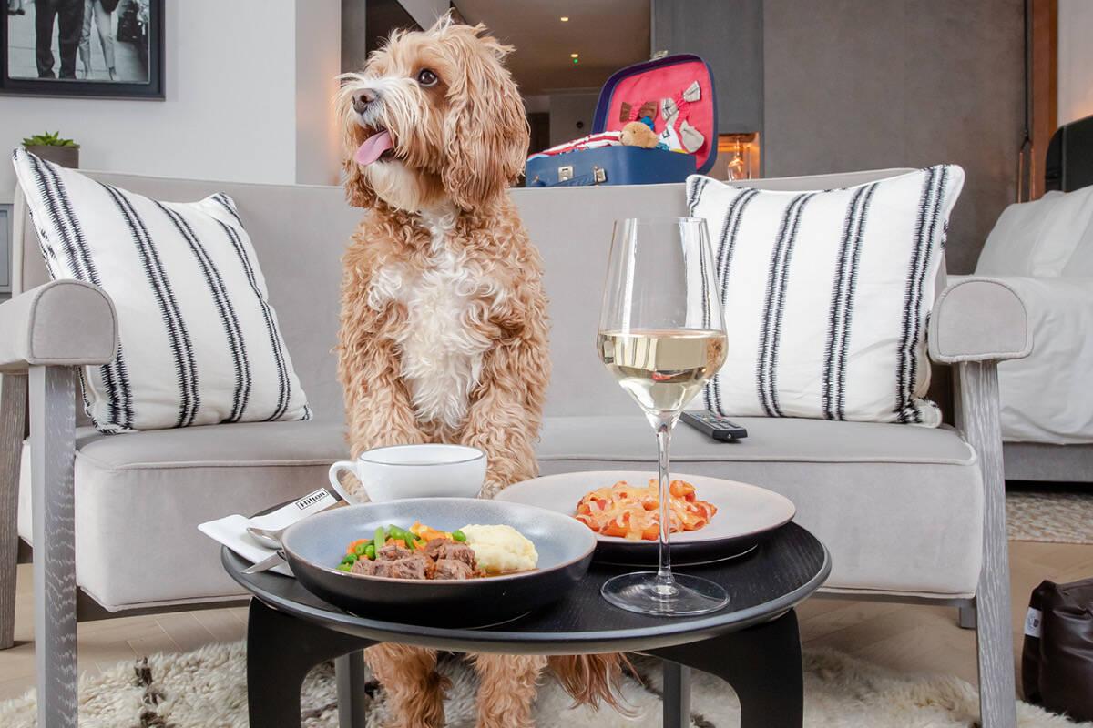 Como gratidão pela companhia durante o isolamento, hotéis Hilton lançam menu para cães