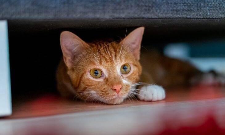 Aprenda a traduzir o que o seu gato está tentando dizer