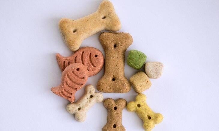 Confira uma seleção de petiscos naturais para a happy hour do seu cão ou gato