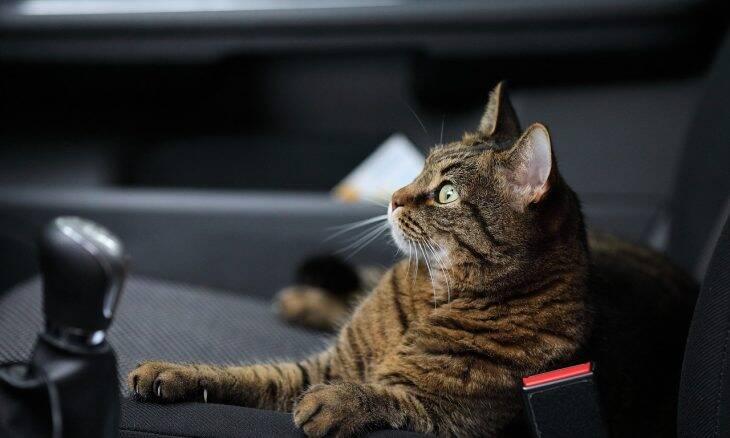 Tudo o que você precisa saber para viajar com o seu gato
