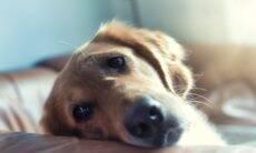 Quer saber por que o cão está estressado? Investigue o dono