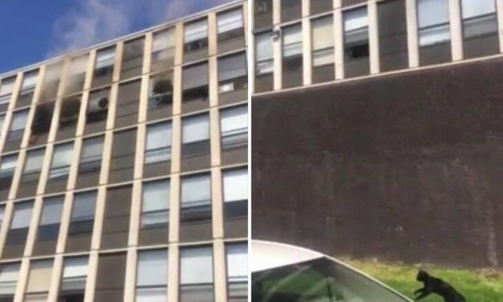 Vídeo: Gato salta do 5º andar de edifício em chamas e sobrevive