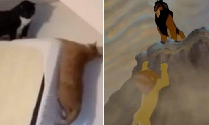 Em vídeo hilário, gatos reproduzem cena de 'O Rei Leão'