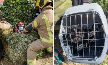 Cão ouve choro e salva gata presa em poço por dez dias