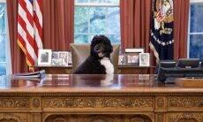 Casal Obama chora a perda de Bo, cãozinho da família morto por câncer