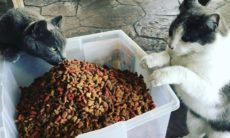 Gatos invadem bar e são adotados por donos e clientes