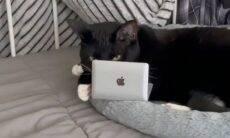 Vídeo: mulher usa truque genial para afastar o gato do laptop e viraliza