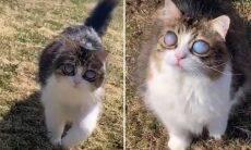 Gato cego fica com olhos impressionantes e vira estrela na internet