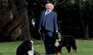 Vídeo: presidente da Irlanda tenta dar entrevista, mas cão pede atenção e rouba o show