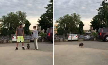 Vídeo: cães preferem o dono ou a dona? Desafio no TikTok tenta responder