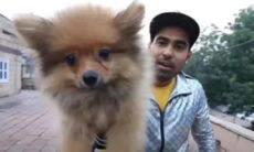 Youtuber é preso ao amarrar cão em balões para fazer vídeo do bichinho 'voando'