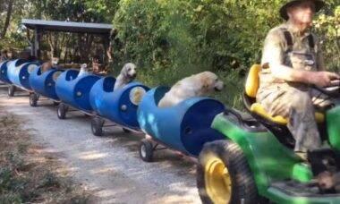 Vídeo fofo: ferroviário aposentado monta trenzinho para os seus cães