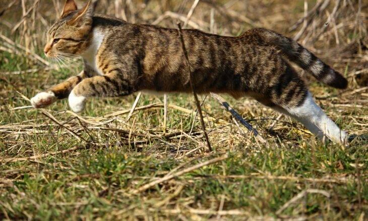 A ciência explica por que os gatos caem sempre de pé