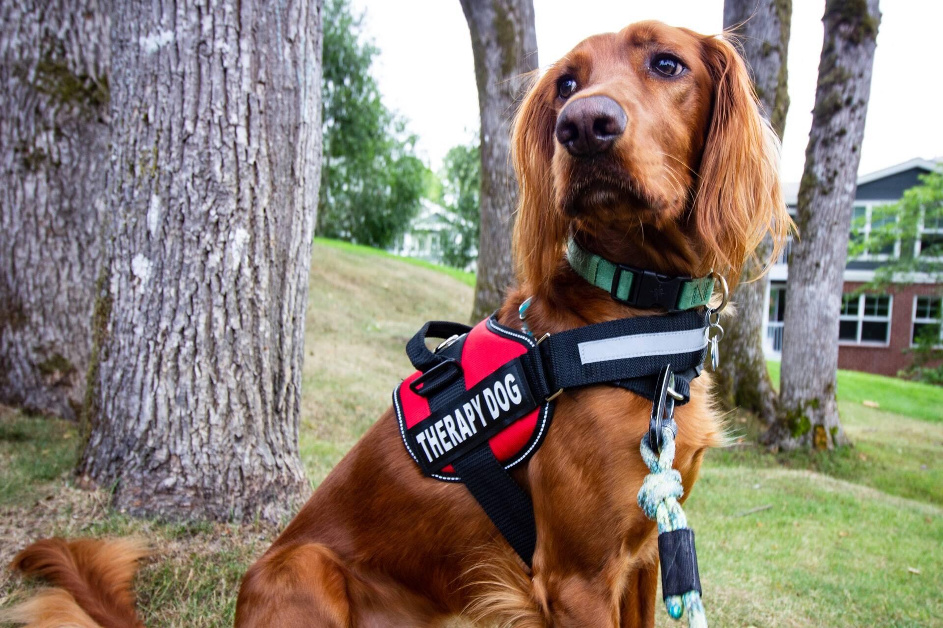 Cães terapeutas aliviam a tensão de estudantes, comprova estudo