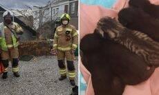 Gata dá à luz em chaminé e dá início a uma complicada operação de resgate