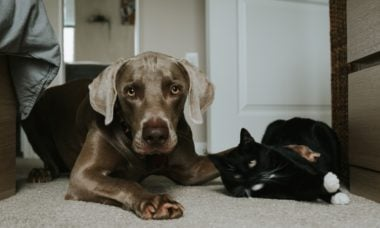 6 dicas para pacificar a convivência entre cães e gatos na mesma casa