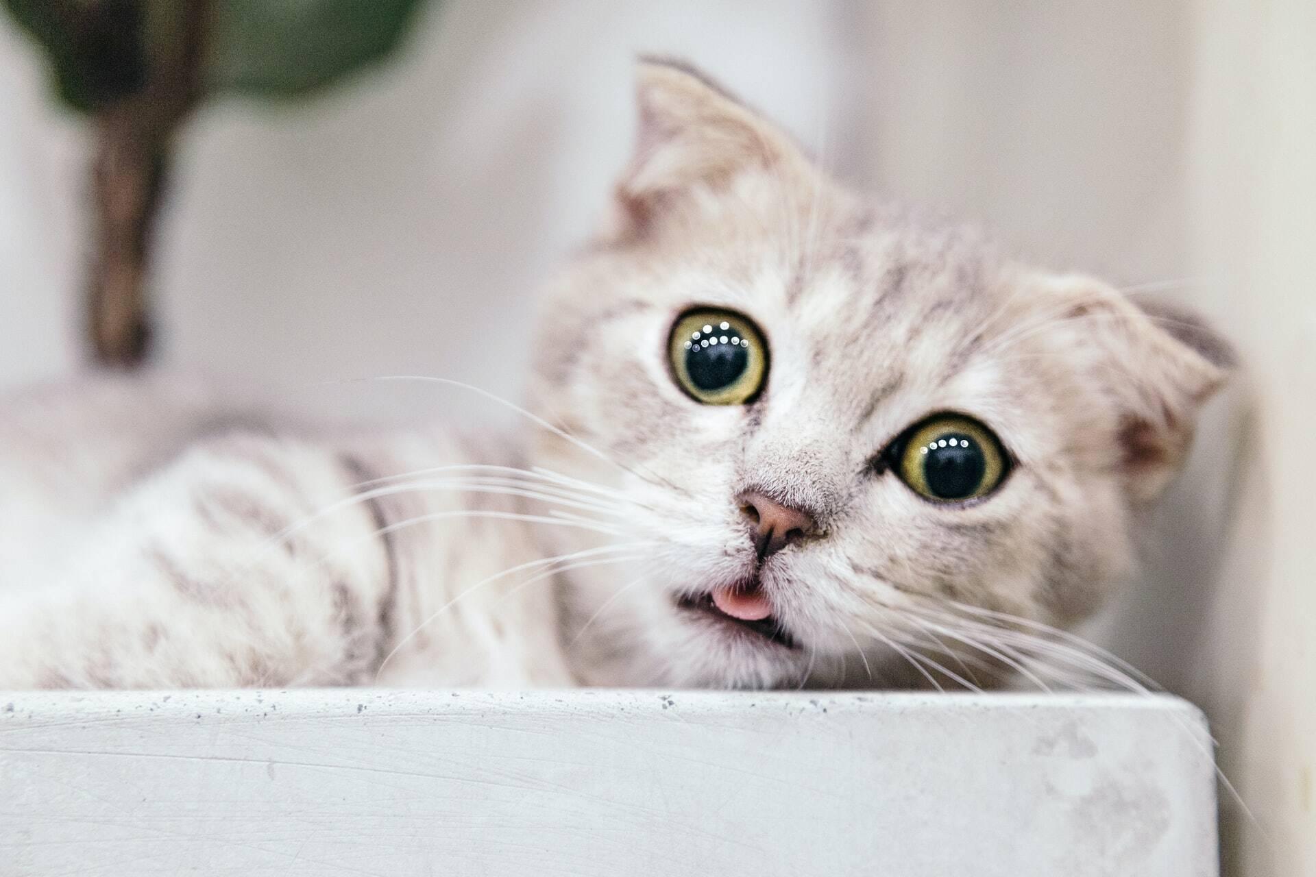 Seu gato está evitando a caixa de areia? Pode ser uma dessas três razões