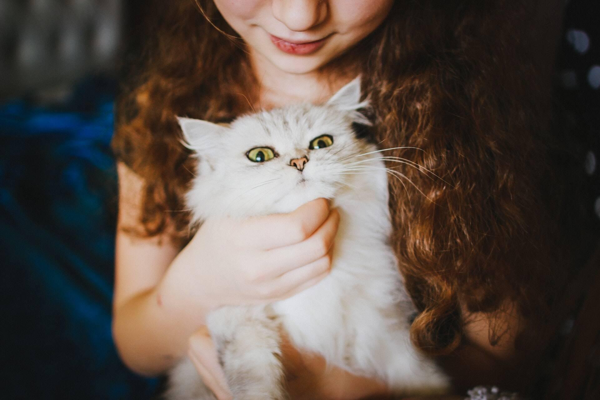 Gatos ajudam crianças autistas a se sentirem confortáveis em ocasiões sociais