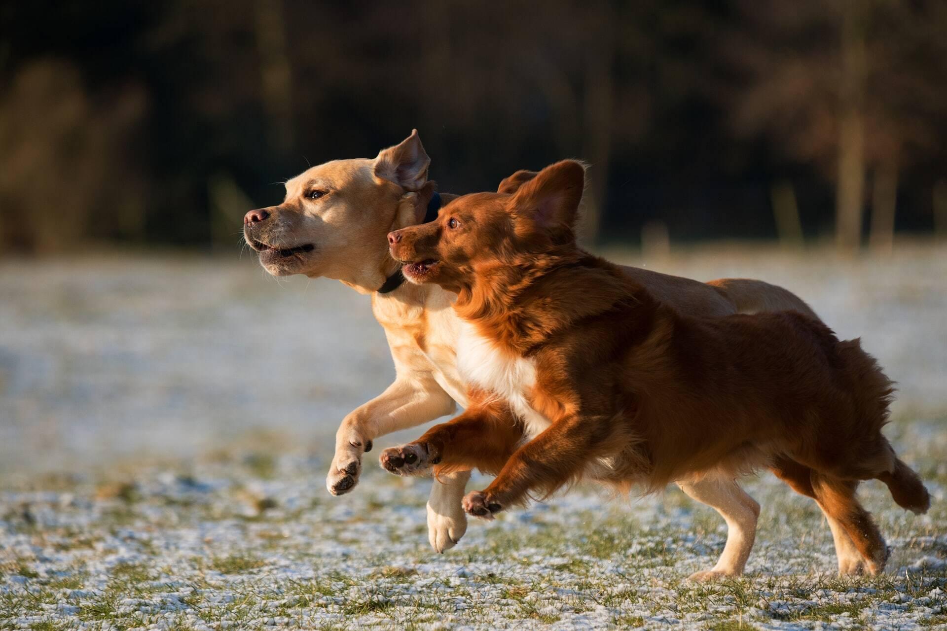 Estudo: seu cão tem uma vida social muito melhor que a sua