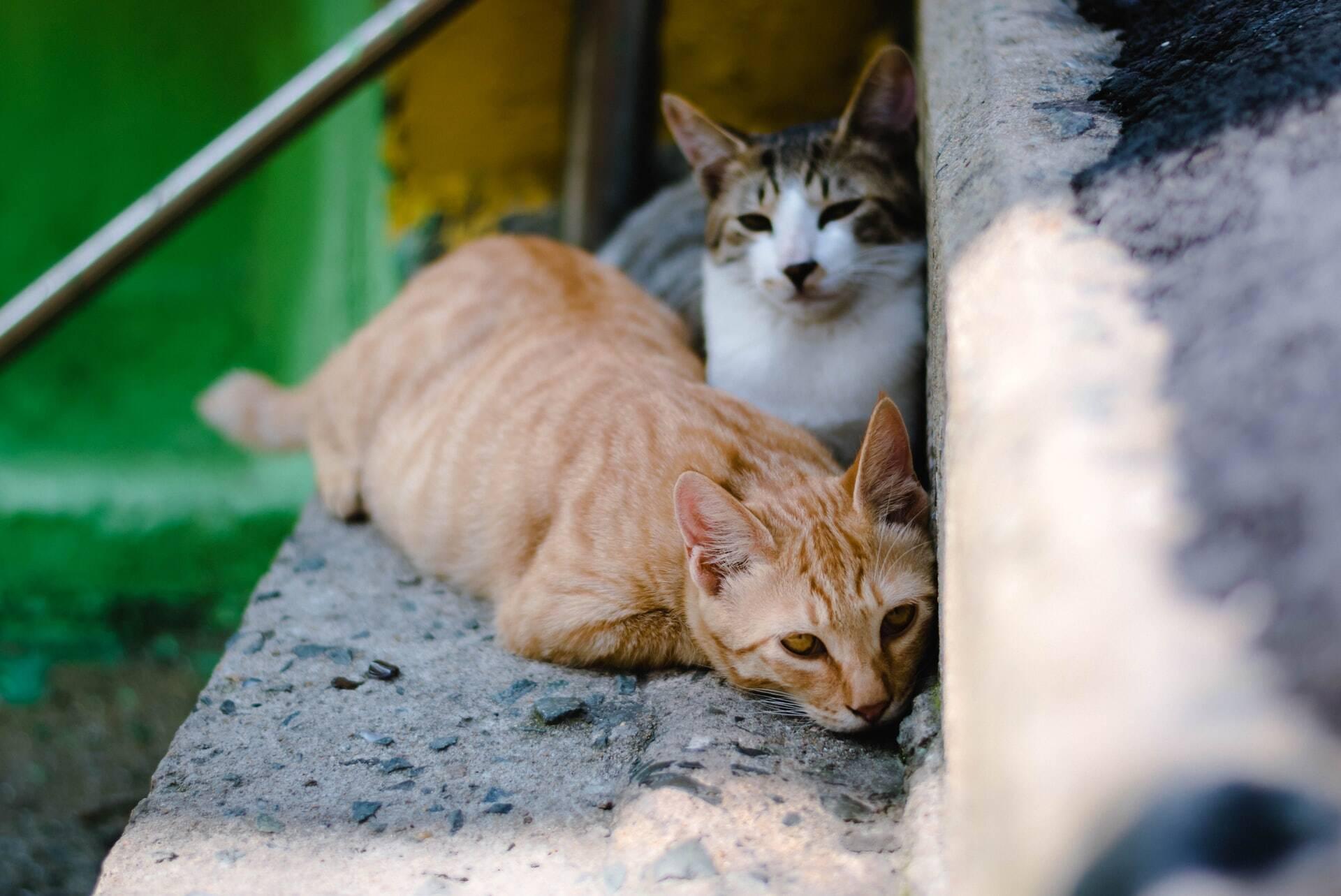 Gatos de rua chegam a 1 milhão em Israel e ameaçam saúde pública