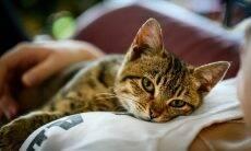 Entenda por que o seu gato esfrega a cabeça em você, nos móveis, nos calçados...