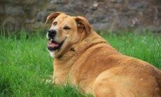 36% dos cães ganharam peso durante a pandemia, indica pesquisa
