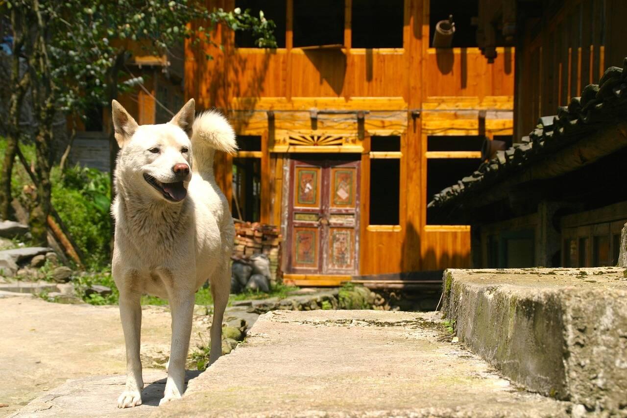68 cães são resgatados e não viram churrasco em festival chinês