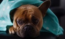 Veterinária dá dicas para evitar problemas respiratórios em cães e gatos neste inverno
