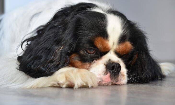 12 sinais de que o seu cão está com problemas sérios de pele